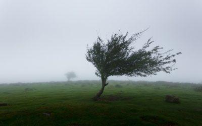 Dégâts de tempête : rappel des formalités pour votre assurance
